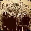 Black Stone Cherry — BLACK STONE CHERRY