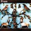 Pram — The Museum of Imaginary Animals