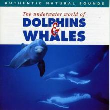 Relax With Nature — Dolphins & Whales